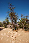 Grand Canyon National Park — Stock Photo