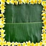 Frame of yellow plumeria on banana leaf — Stock Photo #12011231