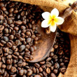 Coffee beans with plumeria - Stock Photo