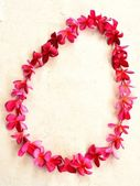 Lei of pink plumeria on white background — Stock Photo