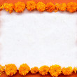 Frame of marigold on orange background — Stock Photo