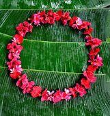 赤いハイビスカス、熱帯の花の花輪 — ストック写真