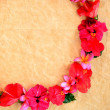 Lei of red hibiscus. — Stock Photo