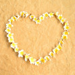 Stock Photo: White plumeria.heart shaped