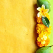 Mango with tropical flowers.frame. — Stock Photo