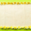 Plumeria.frame.yellow green background — Stock Photo