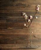 Flores de cerejeira japonesas — Fotografia Stock
