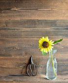 Sun flower with scissors — Stock Photo