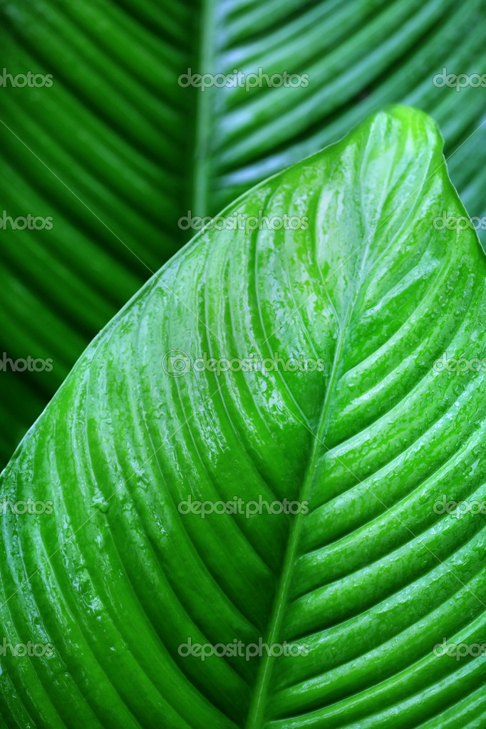 Leaf with rain droplets — Stock Photo #12164287