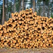 Stacked Logs — Stock Photo #14991717