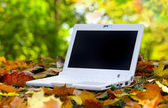 White Laptop in an automn scene — Stockfoto