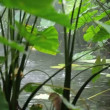 Rainforest — Wideo stockowe #28549421