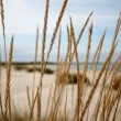 Marram grass in front of the ocean — Stock Video