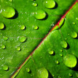 Leaf with rain droplets — Stock Photo