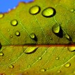 Leaf with rain droplets — Stock Photo #33086531