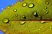 Leaf with rain droplets — Foto Stock
