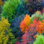 Autumn Orange Leaves — Stock Photo