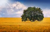 Ett ensamt träd på ett fält — Stockfoto