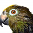 Parrot just took a bath — Stock Photo