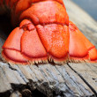 Lobster tail — Photo #40549703