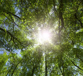 Green forest. Sun light through treetops. — Stock Photo