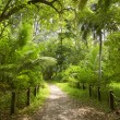 Walking path in green forest. Saychelles. Mahe island. — Stock Photo