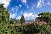 The Palace of count M.W.Vorontsov green park. Ukraine. Crimea. — Stock Photo