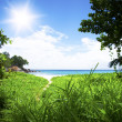 Stock Photo: Green forest with path to white beach. Seyshelles