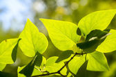 филиал зеленых листьев в солнечный день — Стоковое фото