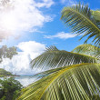 Green tropical forest and azure indian ocean. — Stock Photo