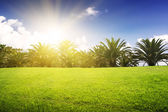 Green field and tropical palm — Stock Photo