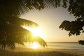 Mahe island, Seychelles. Sunset beach. Palms. — Stock Photo