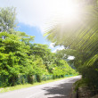 La Digue island, Seyshelles. Road in green jungle. — Stock Photo