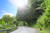 Asphalt road in tropical forest. — Stock Photo