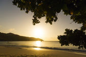 Mahe island, Seychelles. Sunset beach. Palms. — Stock Photo
