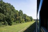 Passenger train rides through the forest.  — Stockfoto