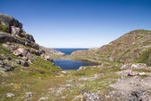 Mountain lake in the North. Moss-covered hills, and stunted vege — Stock Photo