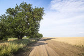 Country road among fields of wheat.  — Stockfoto