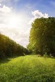 森林によって囲まれる緑の草原. — ストック写真