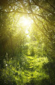 A narrow path in the fairy forest — Stock Photo