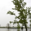 Stock Photo: River Danube flood