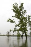 River Danube flood — Stockfoto