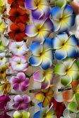Flower clip — Stock Photo