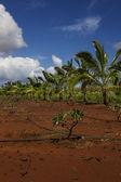 Tropic farm land — Stock Photo