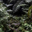 Jungle stream — Stockfoto