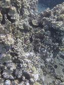 Reef colony — Stock Photo