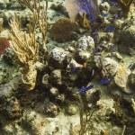 Reef life — Stock Photo #45629717