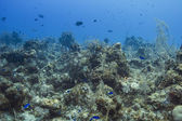 Living ocean — Stock Photo