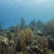 Life in the reef — Stock Photo #50212971