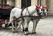 Przewozu koni — Zdjęcie stockowe